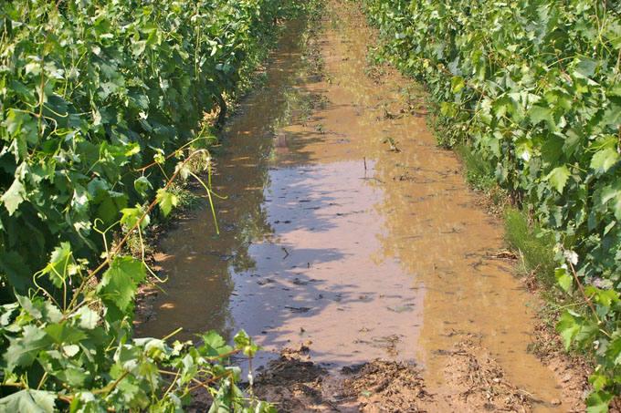 La tormenta daña cultivos en La Rioja Alta